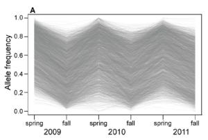 Bergland et al. Figure 2A. Allele frequency change at each of the ∼1750 seasonal SNPs