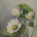 Waterlilies by Agnes Jeffrey, Gift of Virginia Jeffrey Smith, MAG 68.55