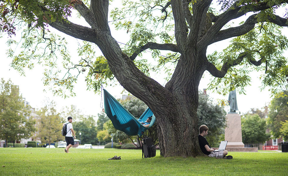 stdents lounging by a tree