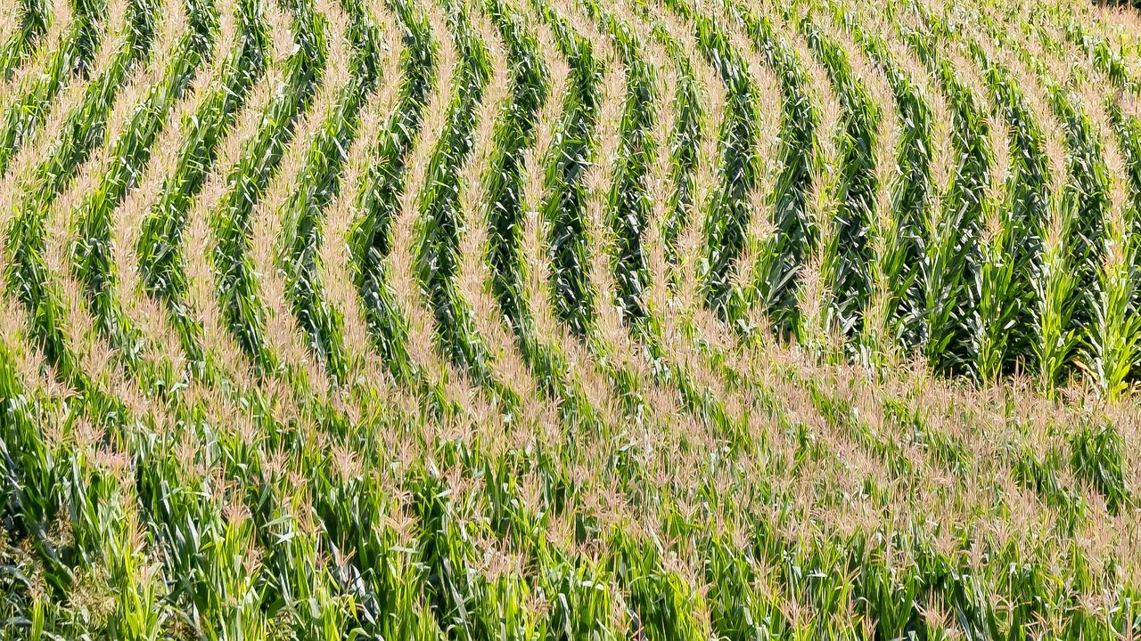 Biodiversity in our Fields and on our Plates: How We Can Move Away From Corn