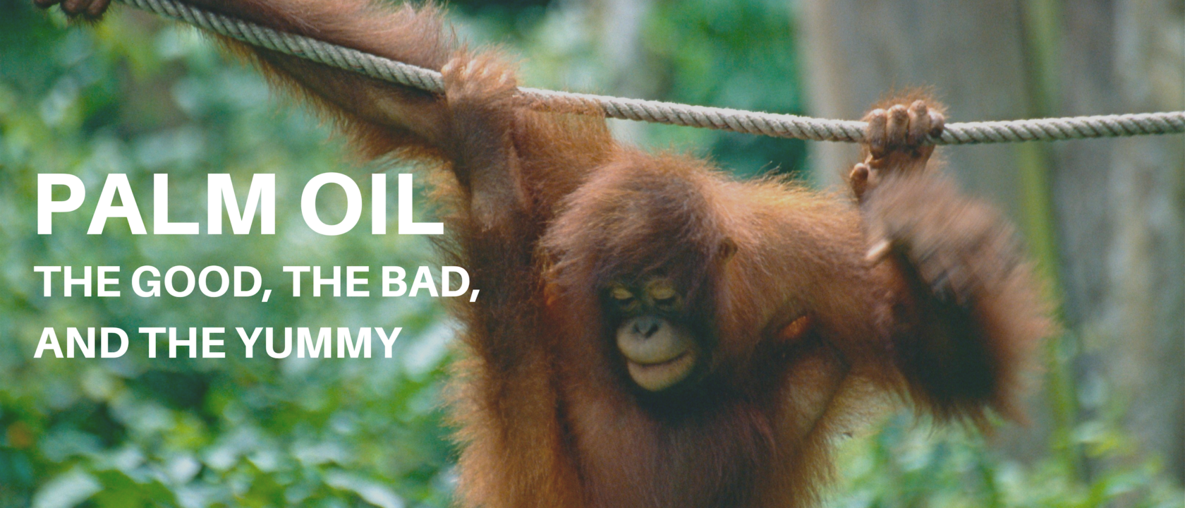 Palm Oil: The Good, The Bad, and The Yummy