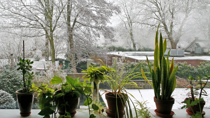 Caring for Plants in the Winter